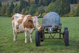 Salzstein - Leckereien für die Kuh