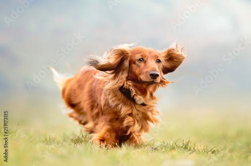 fototapeta na ścianę Portrait of a dog