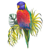 Colorful parrot with palm and monstera leaves. Isolated watercolor on white background.