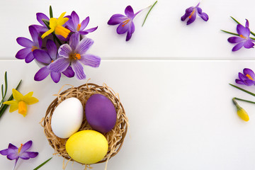 Purple crocuses and easter Eggs in the nest isolated on white wood Background.