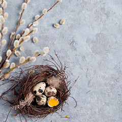 Quail Easter eggs on grey background with willow branch