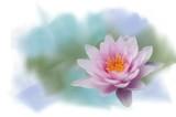 rosa Seerose gemalt