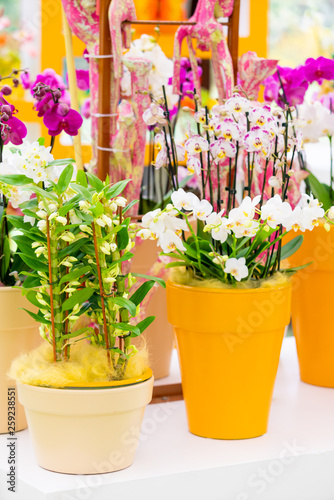 beautiful plant orchid flower - 259238551