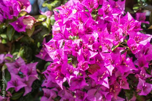 Spring flower backgrounds - 259239980
