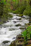 A beautiful white water stream in The Smokies surrounded with greenery.