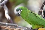 オウム Parrot