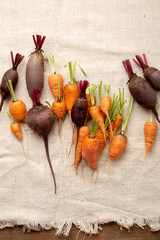 Harvest of young carrots and beets, food above