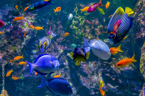 fototapeta na ścianę colorful reef fishes