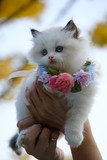 Many pictures of variety cats and beautiful colors