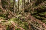 Fototapeta Fototapety z naturą - trees in idyllic forest © stefan1085