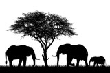 Realistic illustration with silhouette of three elephants on safari in Africa. Acacia tree and grass isolated on white background, vector