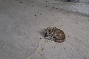 Chien roulé  en boule dans la poussière