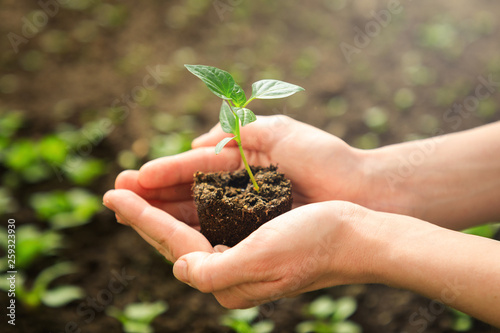 Female's hands holding young plant in the garden