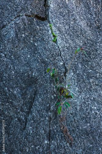 Durch eine Felsspalte wächst ein grünes Gewächs hindurch © Michael