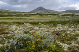 Rondane National Park in summer