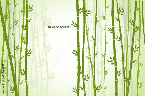 Vector greeting card with bamboo on a light background.