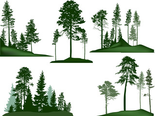 set of five green pine trees groups on white