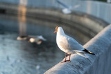 River gull at the river bank in the city