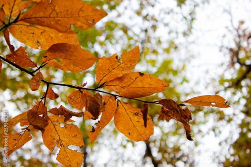 fototapeta na ścianę beautiful autumn in the forest
