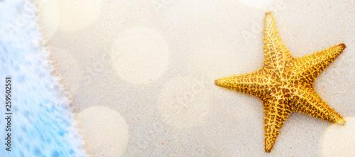 Art seashells on seashore - beach holiday background - 259502551