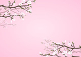 Pink background with blossoming magnolia branches