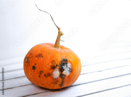 canvas print picture Pumpkin ugly with rot on white wood background