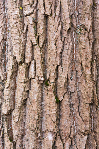tree bark texture © leon134865