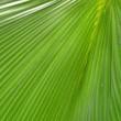 canvas print picture - palmblatt