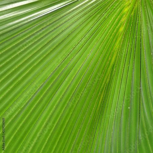 canvas print picture palmblatt