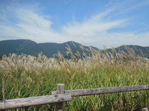 仙石原 © 哲二 川端