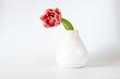 canvas print picture - Tulpe (einzeln)
