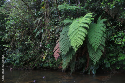 Different colors of enormous ferns next to a river in tropical rainforest