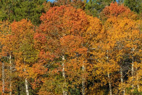 fototapeta na ścianę Scenic Autumn Landscape in the Tetons