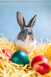 Leinwanddruck Bild - Easter bunny rabbit on the white blue background. Easter holiday concept. Cute rabbit in hay near dyed eggs.  Adorable baby rabbit.  Spring and Easter decoration. Cute fluffy rabbit and painted eggs.