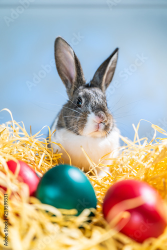 Leinwanddruck Bild Easter bunny rabbit on the white blue background. Easter holiday concept. Cute rabbit in hay near dyed eggs.  Adorable baby rabbit.  Spring and Easter decoration. Cute fluffy rabbit and painted eggs.