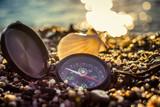 Seashells on the beach - 259599559