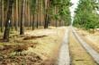 canvas print picture - Weg vorbei an Wald und Heide
