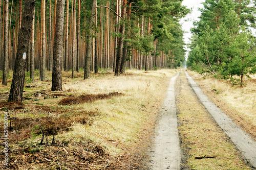 canvas print picture Weg vorbei an Wald und Heide