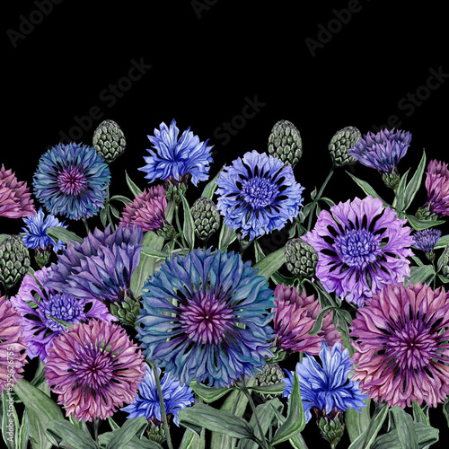 Leinwanddruck Bild Beautiful centaurea flowers with green leaves on black background. Seamless floral pattern, border. Watercolor painting. Hand drawn and painted illustration.