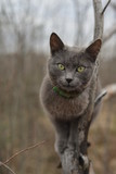 grey cat in the wood