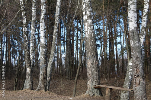 the trees in the forest in early spring, and a bench