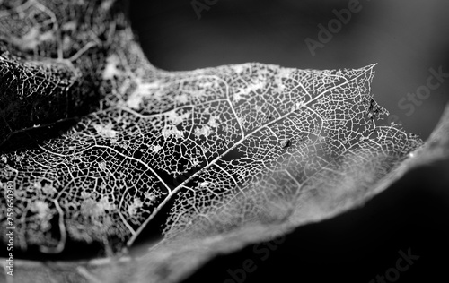 canvas print picture leaf