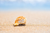 Macro shot of beautiful shell at sand beach at sea. Can be used as summer vacation background - 259694781