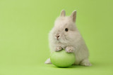 Easter bunny with egg on green background