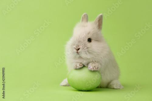 Leinwanddruck Bild Easter bunny with egg on green background