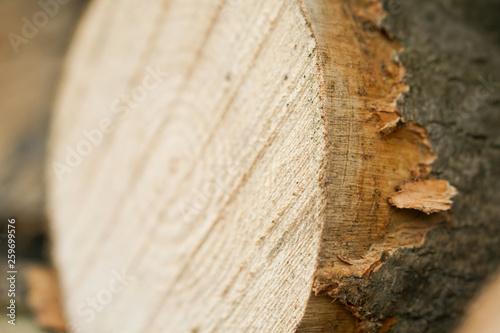 Baumstamm Jahresringe © witte-mediendesign©