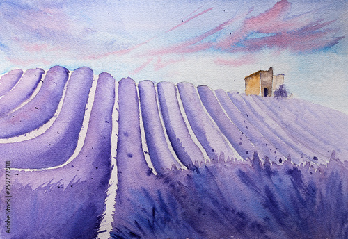 Watercolor hand drawn lavender field © nolonely