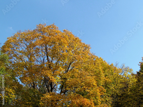 Colorful foliage in the autumn park/ Autumn leaves sky background © Olha