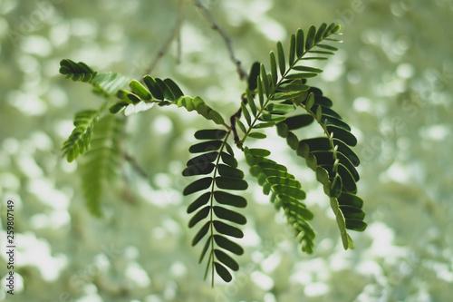 canvas print picture Gruene Blaetter auf gruenem Hintergrund