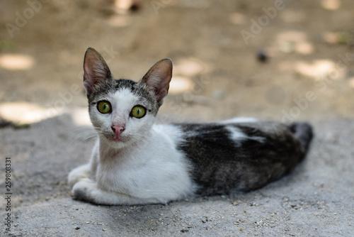 canvas print picture Geheimnisvolle Katze mit durchdrigendem Blick und gruenen Augen